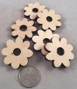 Canadian Pine Daisies - 1.5