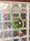 Polly's Rainbow Double Ring Swing - Large
