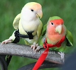 Aviator Flight Harness - Mini - Red - Fits Lovebirds, Parrotlet